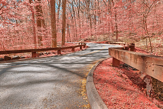 Pink Forest Road - Rock Creek Park | by Bold Frontiers