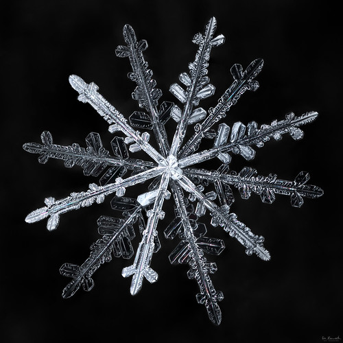 snowflake winter snow macro ice nature water frozen crystal geometry flake fractal twelve mpe focusstacking