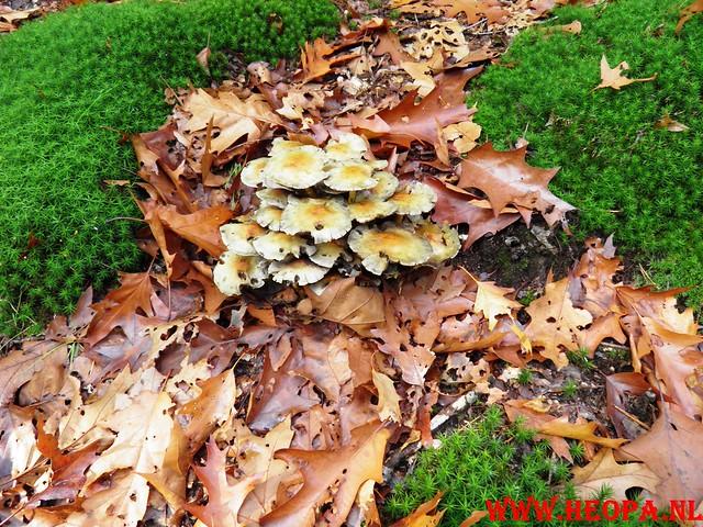 22-10-2011             Driebergen         26 km (97)