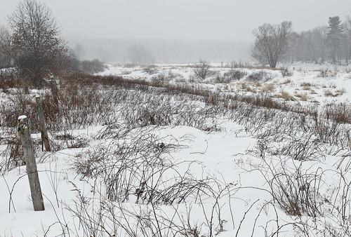 winter snow canada field canon landscape fredericton newbrunswick maritime nouveaubrunswick marysville maritimes wetland atlanticcanada intervale nashwaak canont3i nashwaakvalley