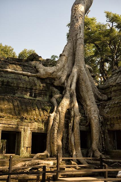 Cambodia:  Ta Prohm - Photo #1