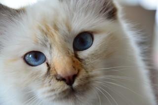 Cat | by olssonwork
