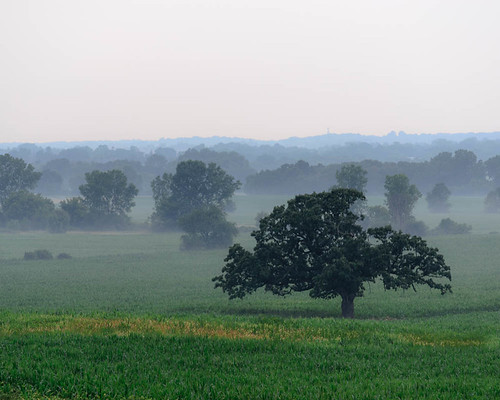 sky tree field misty fog wisconsin rural landscape oak unitedstates country july waukesha oaktree 2012 waukeshacounty