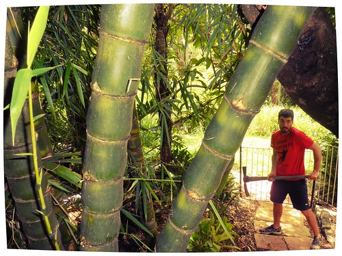 Taming the bamboo   by Ralph Lavelle