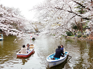 Hanami at Inokashira Park 2013 | by Dick Thomas Johnson