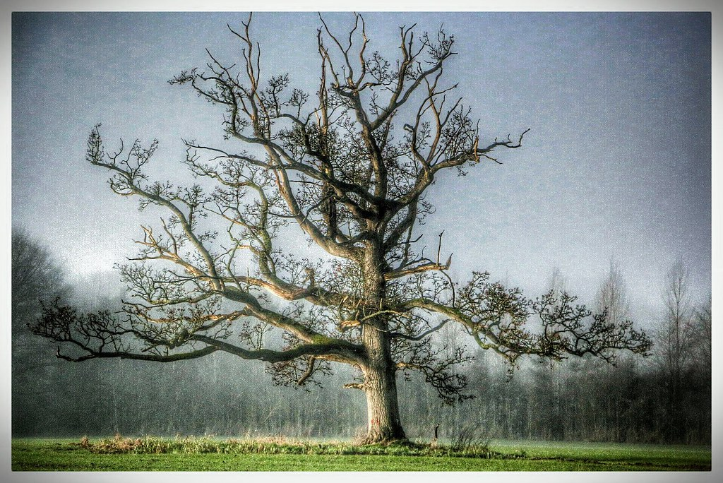 The big real tree