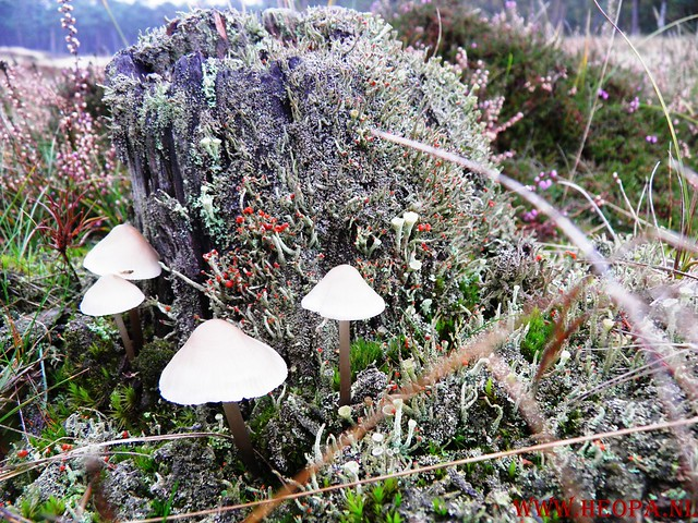 20-10-2012     Wedeblick-   Driebergen        25 Km (31)