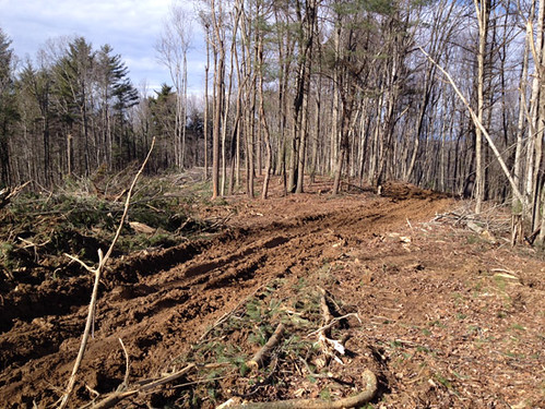 Another view of the house site with rough driveway coming in