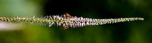 Bees | by bigvern