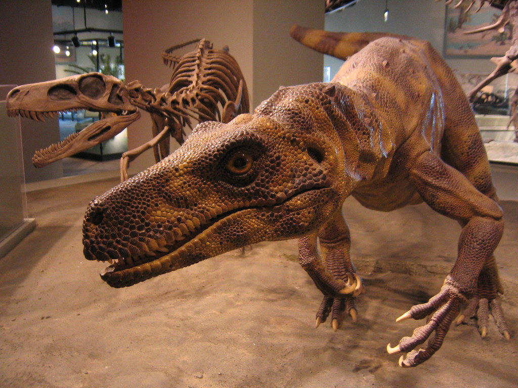Herrerasaurus Cast And Model At The Field Museum Of Natura Flickr