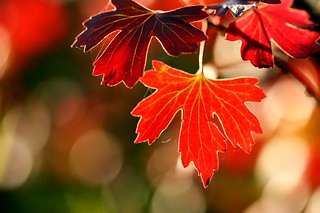 Autumn is on its way !* | by AmUnivers
