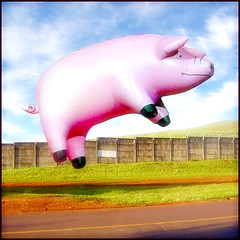 Blank Airport - Flying Pig ! | by oddsock