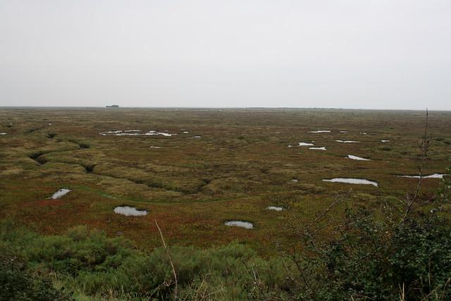 Salt marsh near Wells-next-the-Sea