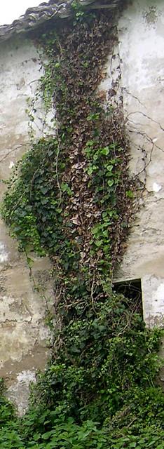 Vecchio casolare in rovina nella campagna marchigiana/Old farmhouse in ruins in the Marche countryside