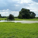 Feuchte Wiese im Deichbinnenland der Walsumer Rheinaue
