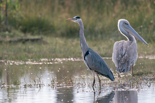 Wild Botswana   by knipslog.de