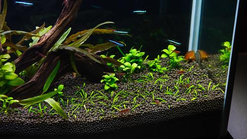 planted low light nano aquarium
