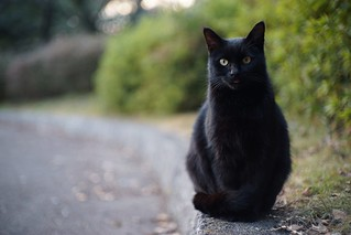 A black cat in Mejo park 2015.01 No.1. | by HIDE@Verdad