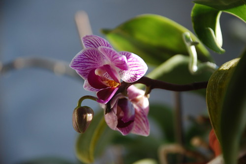orchids | by A Storybook Life
