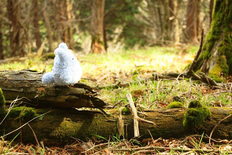 2014-05-06_02182_九州登山旅行.jpg