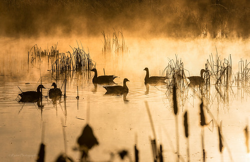 sunrise nikon sunday ducks roadtrip pacificnorthwest waterfowl washingtonstate mtrainier pnw tam d610 orting piercecounty northwestwashington sunriseglow ryderphotographic howardryder tamronsp7002000mmf28divcusd