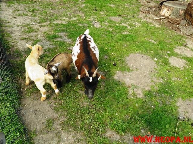 16-04-2011     Rode-Kruis   Bloesem   wandeltocht 26 Km (71)