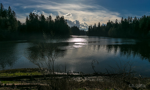 nature forest bay scenic pugetsound washingtonstate woodardbay sunnywinter