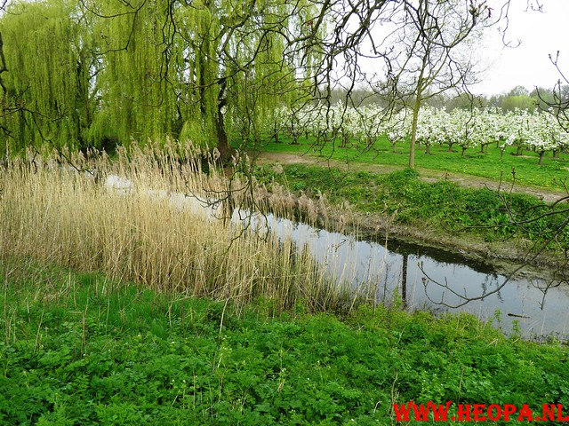 16-04-2011     Rode-Kruis   Bloesem   wandeltocht 26 Km (52)