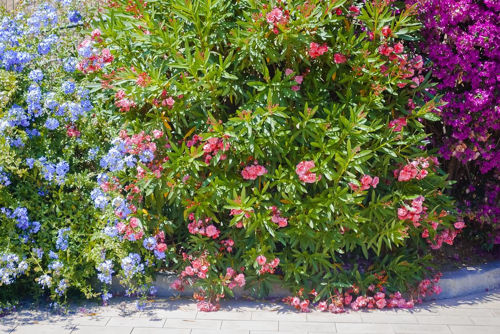 изящное многоцветье 16:38:15 DSC_4574