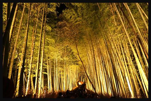 日本京都-嵐山夜燈.13 | by KeikoS.ryoko