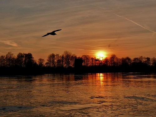 sunset sky clouds river sonnenuntergang gull himmel wolken weser fluss möwe sonnenunterganganderweser