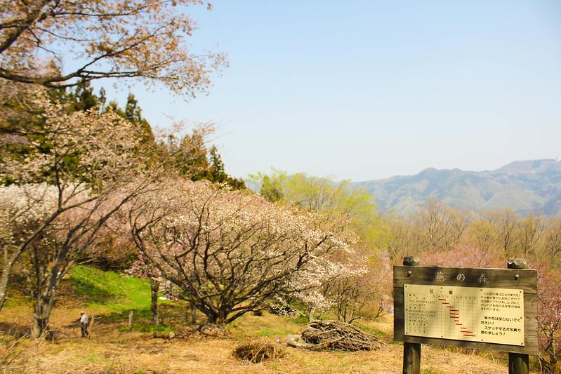 2014-04-19_00228_美の山.jpg