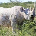 Mon, 02/09/2015 - 11:14 - Wildlife in Etosha Park, Namibia Photo by Patrizia Cocca/GEF