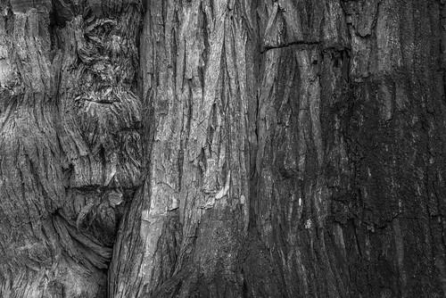 Tree bark texture | by eddit