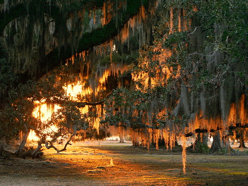 winter sunset lana nature catchycolors louisiana liveoak spanishmoss mandeville nationalgeographic gramlich tnc thenatureconservancy tillandsiausneoides canoneos5d quercusvirginiana sttammanyparish dailydozen fontainebleaustatepark dailynaturephoto lanagramlich jan292015