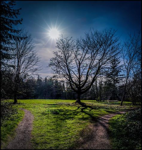 winter shadow sun silhouette shadows path surrey sunburst mapletree longshadow redwoodpark martinsmith southsurrey nikond7000 ©martinsmith nikkor1855mmf3556gvrii