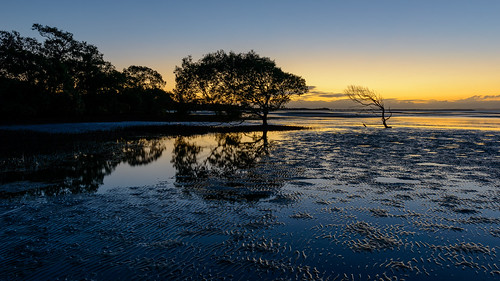 2013 2470mmf28ged au adobe australia autumn bayside beachmere brisbane d800 d800e dawn fall firstlight gp1 landscape lightroom lightroom201561 lightroomcc longexposure mangrove may nikkor nikkor2470mmf28ged nikon pc4510 qld queensland sunrise tree trees water