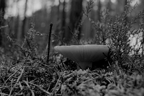 WJR_las_A | by krzysztoflawinski