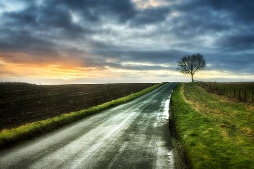 road tree sunrise canon frost sigma 1750 28 warwickshire 40d