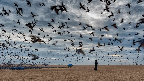 marina chennai birds beach india lady sunrise clouds