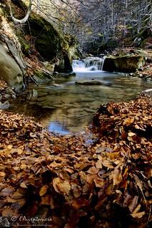 Fallin' into the autumn
