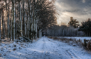 Snowy Path | by Neillwphoto