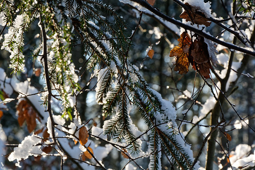 Remains Of Autumn In Winter Light