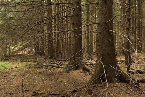 park ca ontario canada nature landscape hiking trail valley boyne provincial shelburne primrose