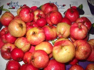 Zaarour Mayhow Berry Fruits Aug 7, 2016 (18) | by toutberryfarms