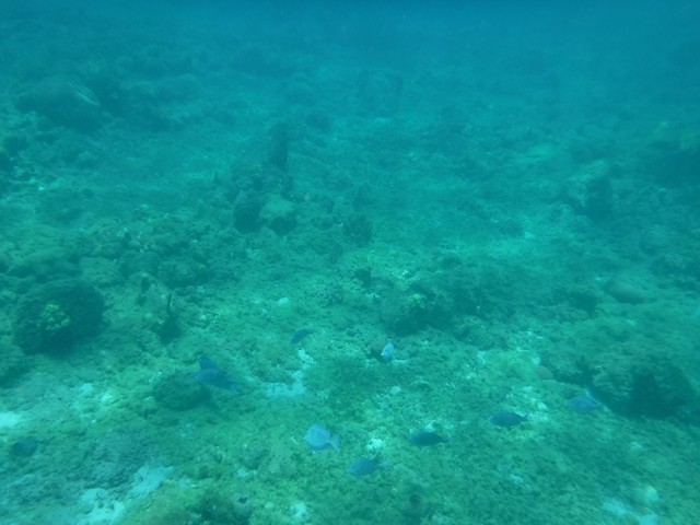 水, 2016-07-13 11:42 - 深いと光が届かない