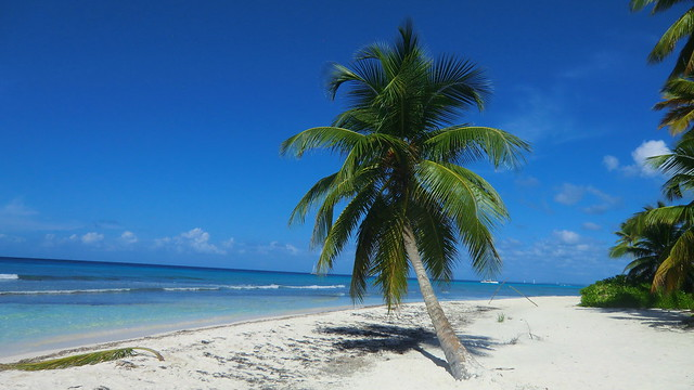 Dominican-Republic - Island of Saona - a Palm tree in the wind