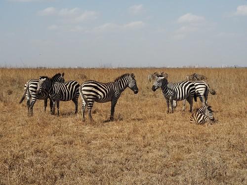 Nairobi National Park | by Laika ac
