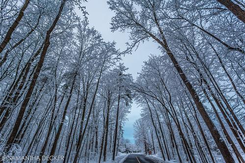 winter snow ny newyork tree wideangle upstate saratogasprings canonef1740mmf4lusm lightroom skidmorecollege uwa canoneos6d samanthadecker
