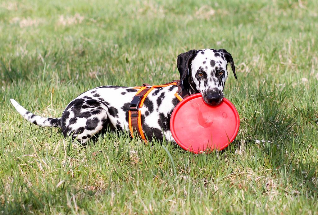 Mein Frisbee